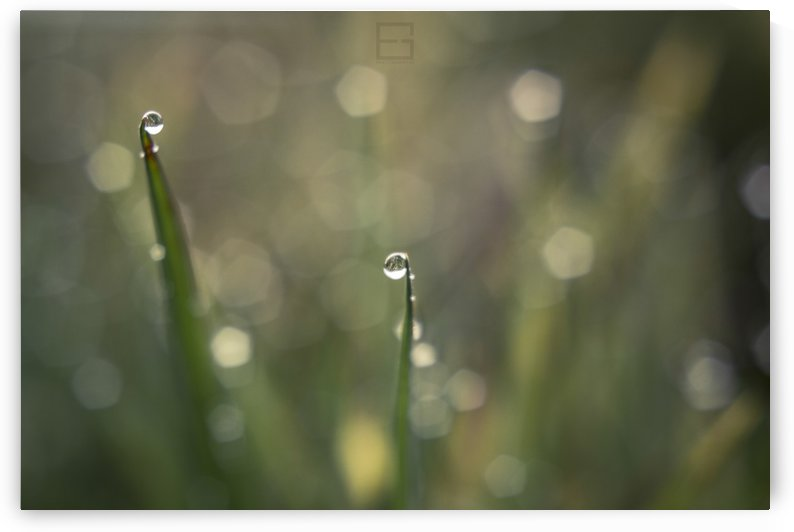 droplet by Emilien Gass