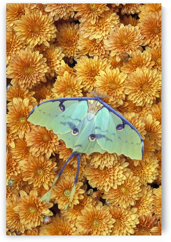 Butterfly On Flowers by PacificStock