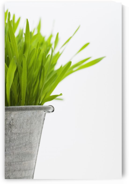 Green Grass In A Pot by PacificStock
