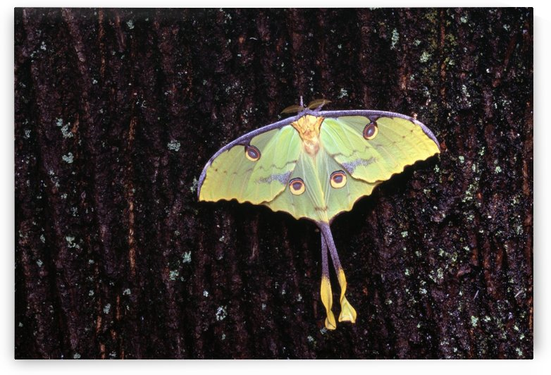 Unique Butterfly Resting On Tree Bark by PacificStock