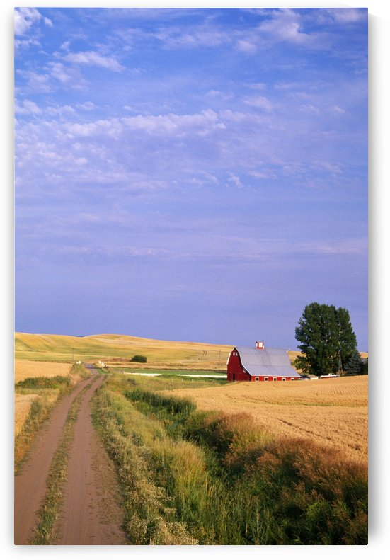 Dirt Road Through Wheat Field by PacificStock