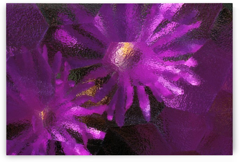 Ice Plant Blossoms Under Ice by PacificStock