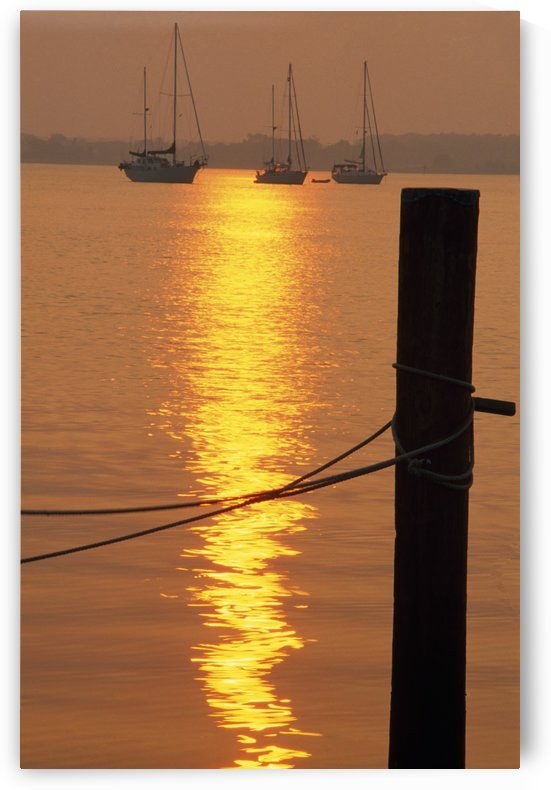 Sailboats At Sunset by PacificStock