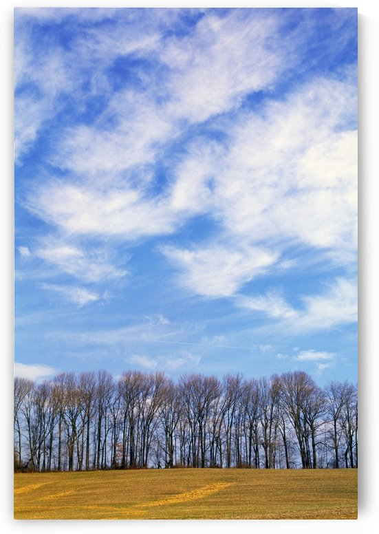 Row Of Trees With Clouds by PacificStock