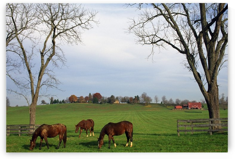 Horses Grazing by PacificStock