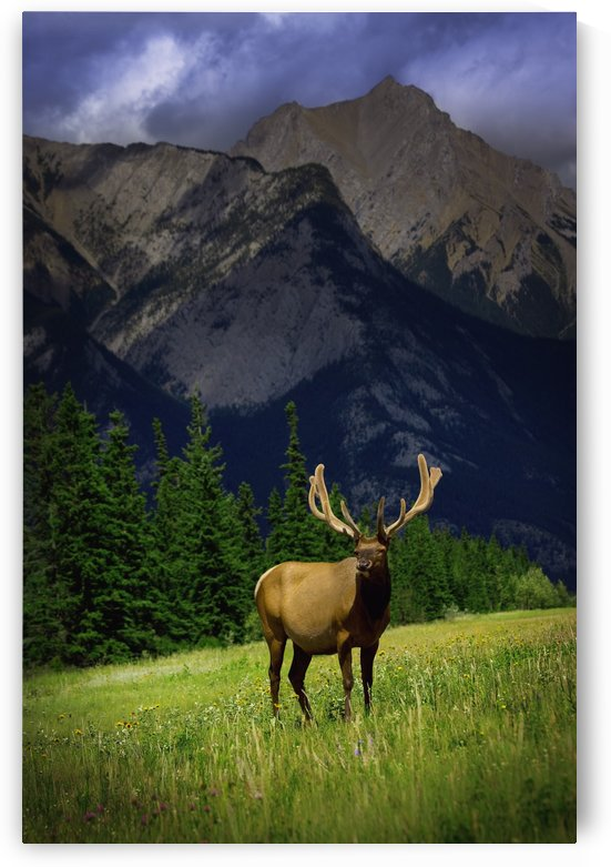 Wildlife In The Mountains by PacificStock