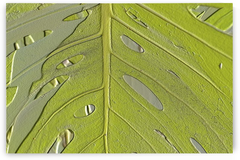Leaf Texture Background by PacificStock