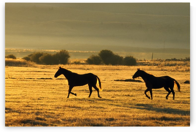 Silhouetted Horses Running by PacificStock