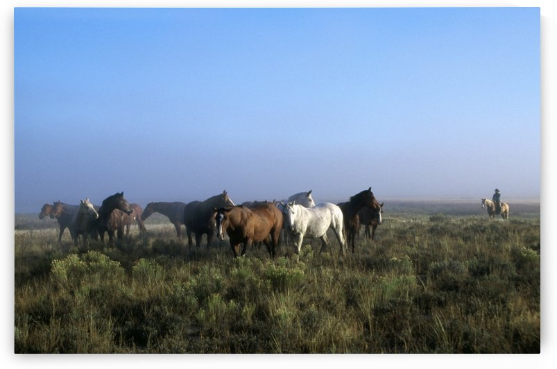 Herd Of Horses And Cowboy On Horseback by PacificStock