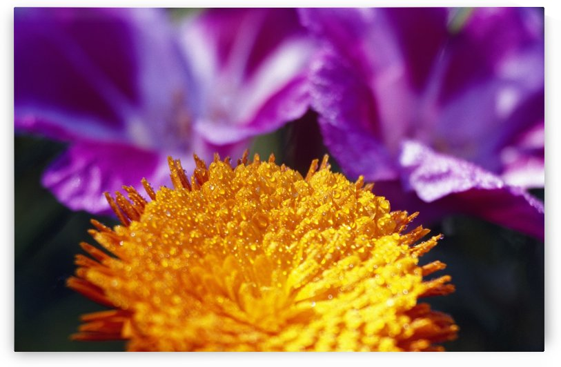 Closeup Of Flower Blossom by PacificStock