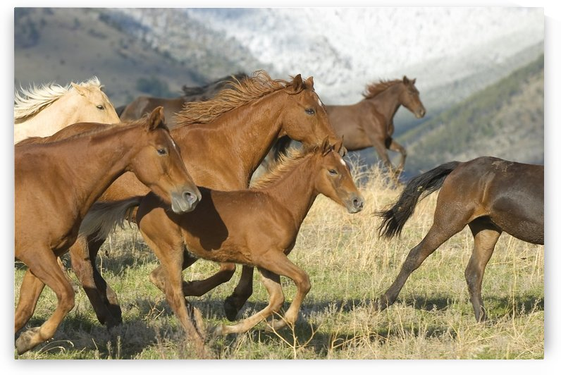 Horses Running by PacificStock