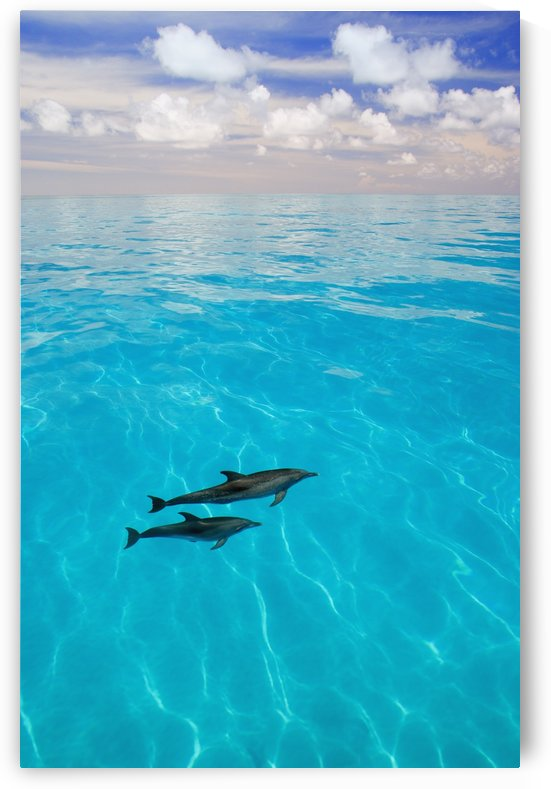 Atlantic Spotted Dolphins by PacificStock