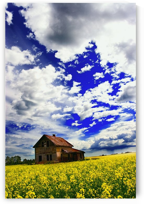Abandoned Farmhouse In A Canola Field by PacificStock