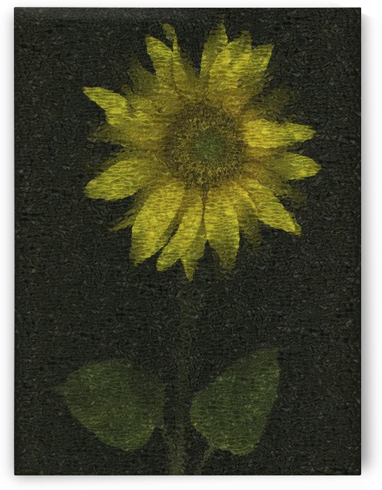 Sunflower by PacificStock