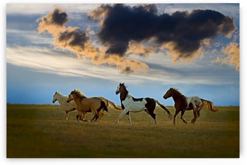 Horses Galloping by PacificStock