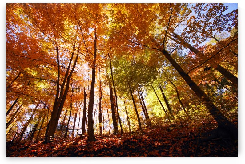 Trees In Autumn by PacificStock