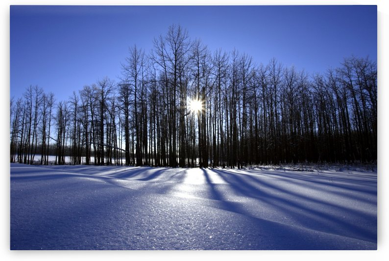 Winter Scene, Saint Bernard Pass, Swiss Alps, Switzerland by PacificStock