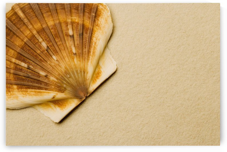 Seashell by PacificStock
