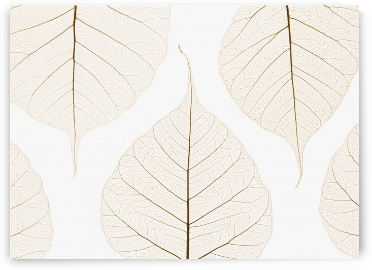 Arranged Leaves by PacificStock