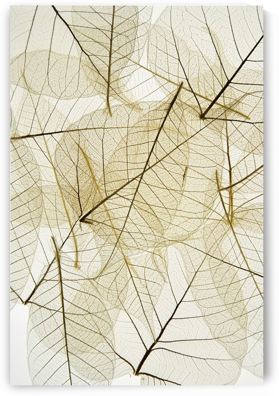 Layered Leaves by PacificStock