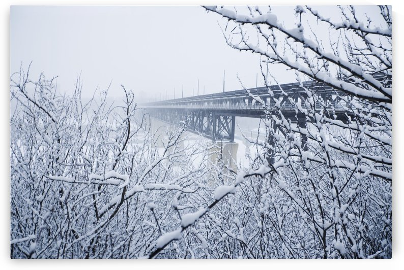Laden Branches Framing View Of Bridge In Winter by PacificStock