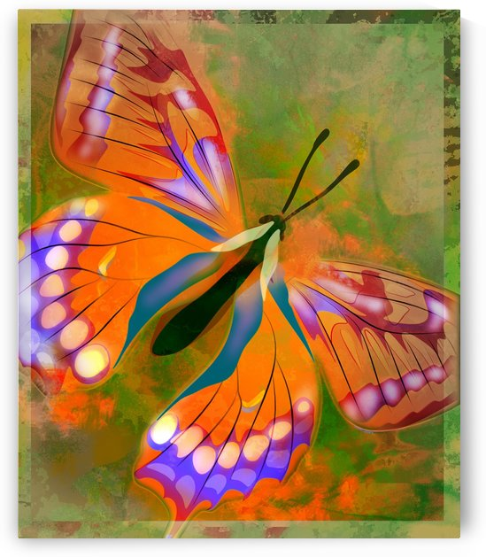 Butterfly Illustration by PacificStock