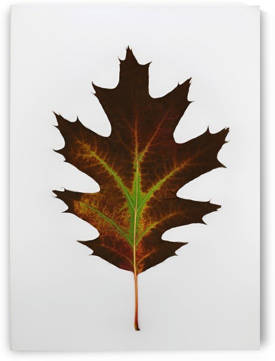 Leaf by PacificStock