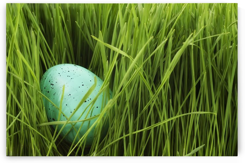 Speckled Egg In The Grass by PacificStock