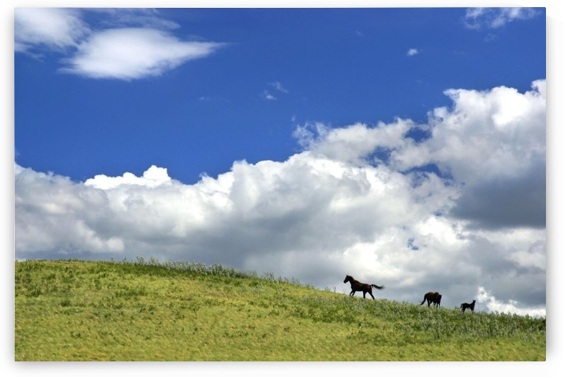 Horses Galloping On Hill by PacificStock