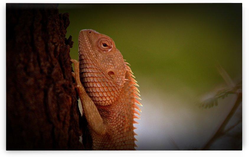 chameleon by Roshan Raj