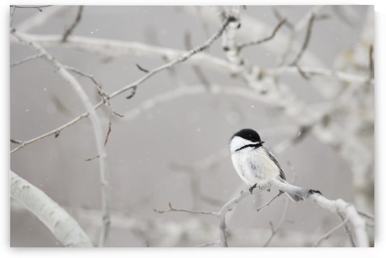 Small Bird On Tree Branch by PacificStock