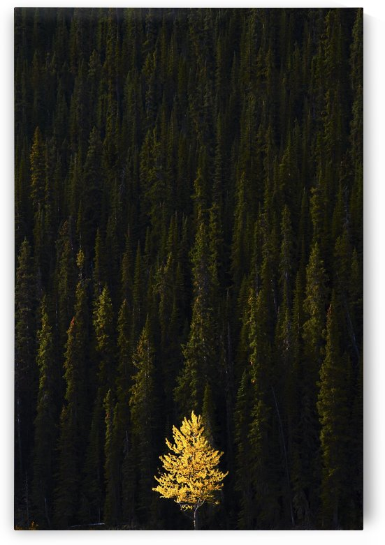 Yellow Tree In Green Forest by PacificStock