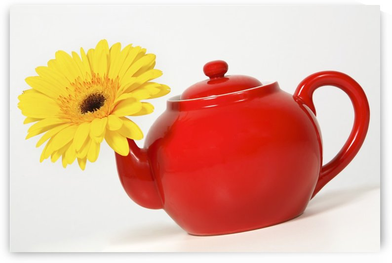 Yellow Flower In A Red Teapot by PacificStock
