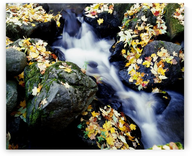 Fall Leaves Among Rocks On A River by PacificStock