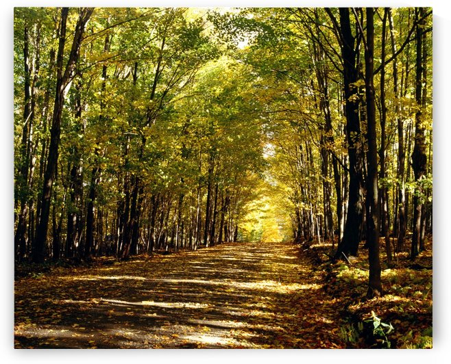 Tree Lined Road In Autumn by PacificStock