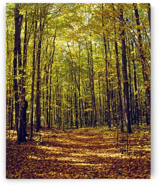 Forest In Quebec, Canada by PacificStock