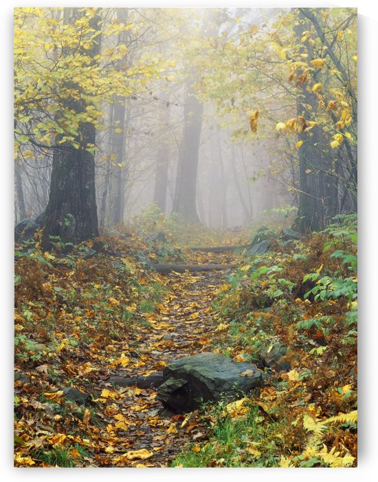 Shenandoah National Park In Virginia, Usa by PacificStock