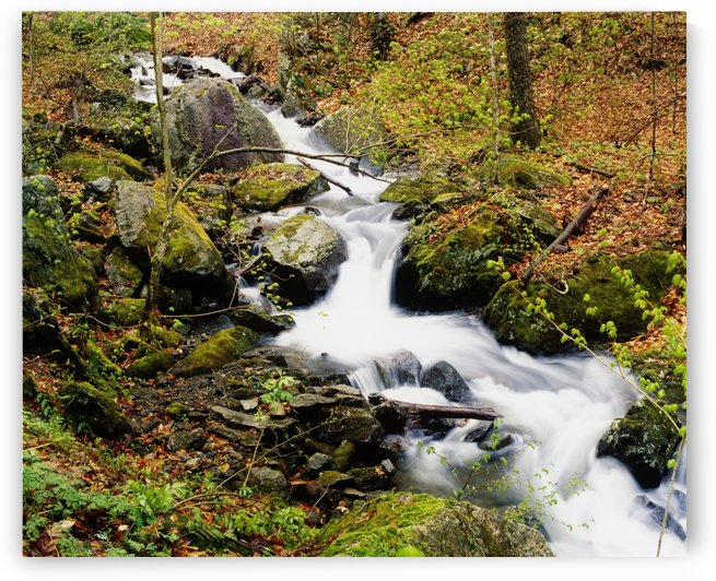 River With Fallen Autumn Leaves In The Forest by PacificStock