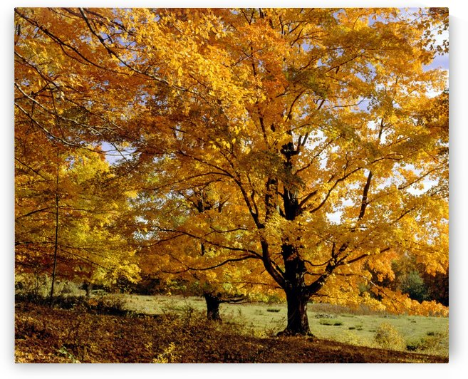 Fall Colours In Eastern Townships, Quebec, Canada by PacificStock