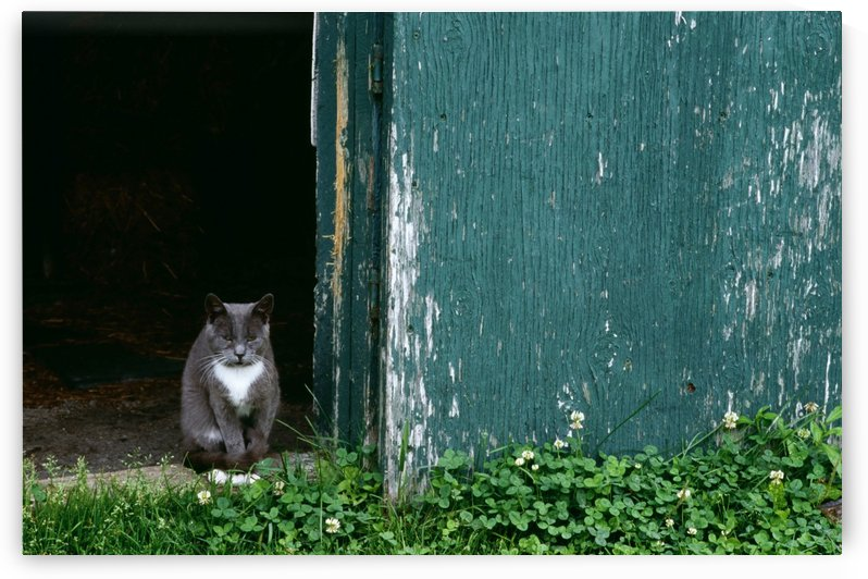 Cat In A Doorway by PacificStock
