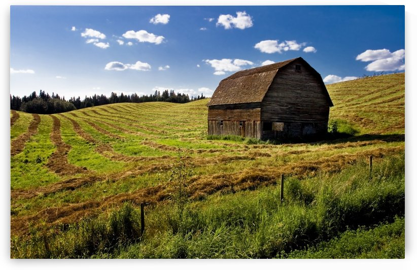 Old Barn In A Field by PacificStock