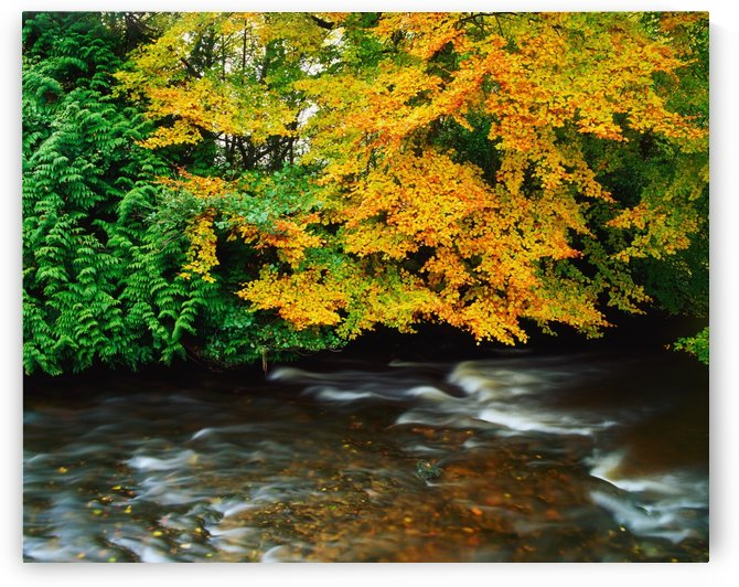 Trees Along A River Bank; Ireland by PacificStock