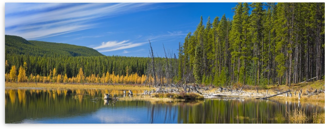 Wilmore Wilderness In The Fall, Alberta, Canada by PacificStock
