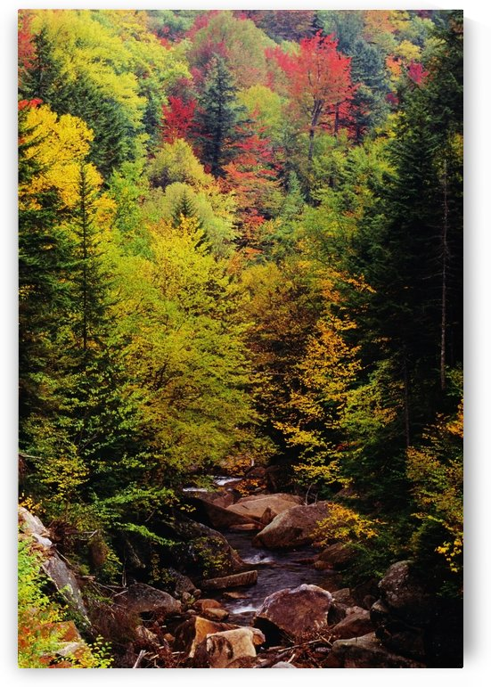 Small Stream Through Forest In Autumn by PacificStock