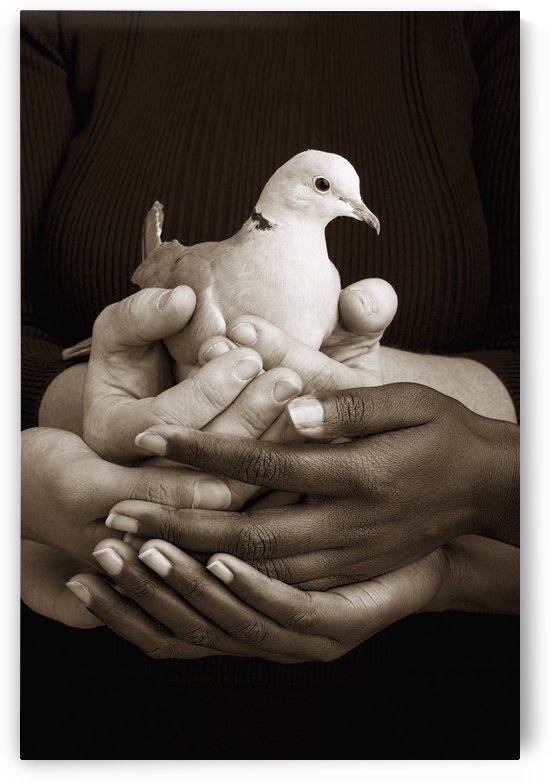 Many Hands Holding A Dove by PacificStock