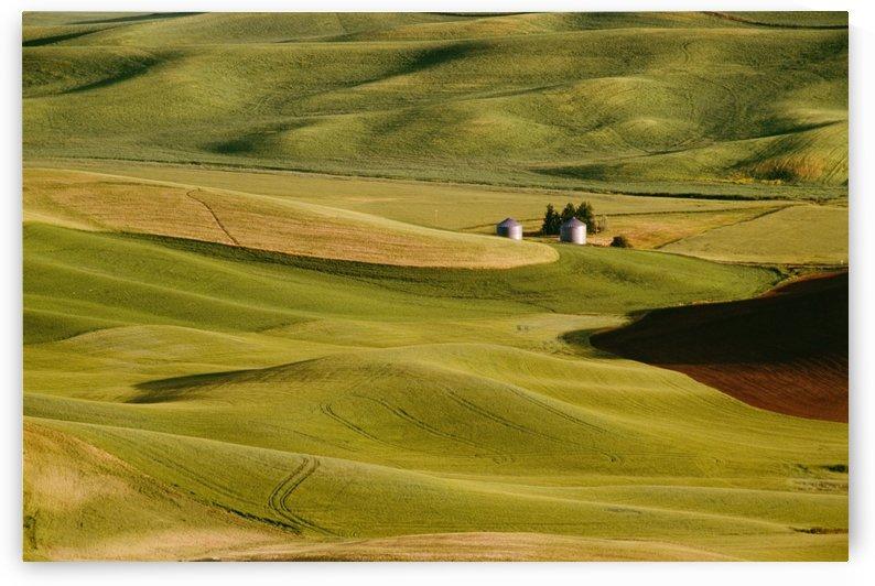 Palouse Fields, Whitman County, Washington, Usa by PacificStock