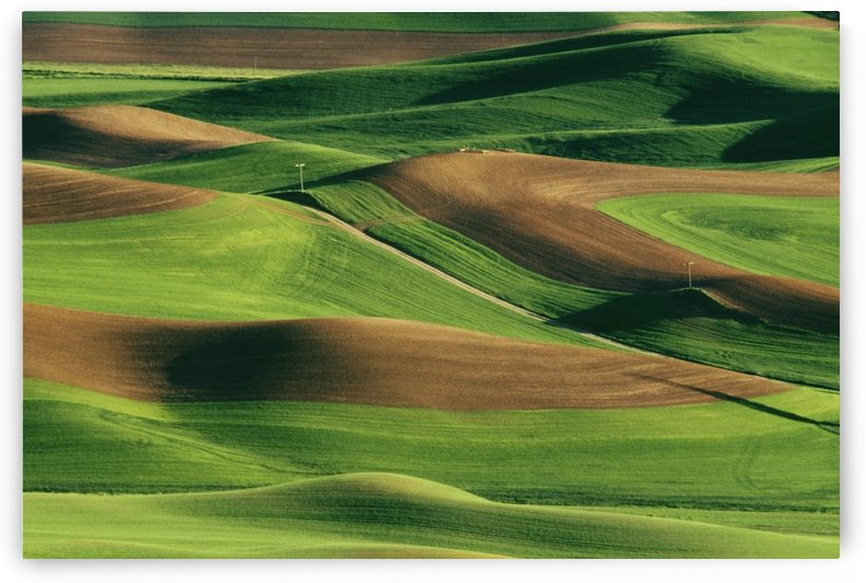 Palouse Fields, Whitman County, Washington, Usa by PacificStock