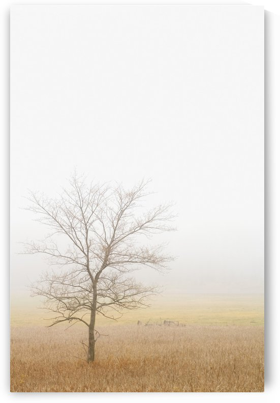 Lone Tree In A Wheat Field by PacificStock