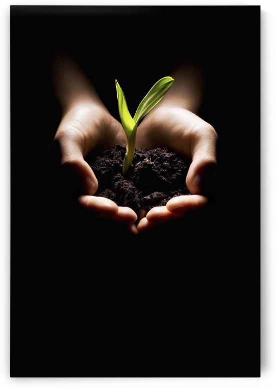 Hands Holding A Seedling by PacificStock