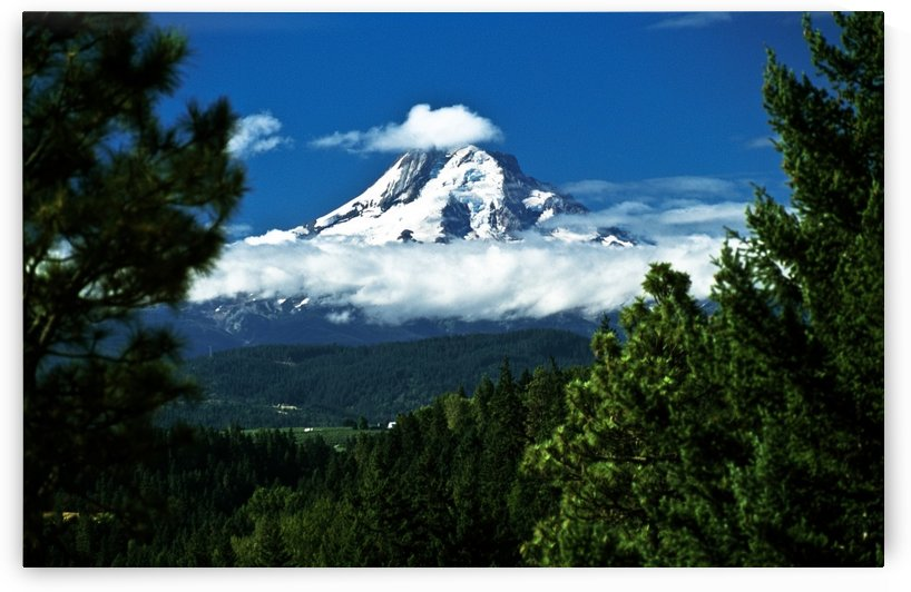 Mount Hood Framed By Trees, Oregon, Usa by PacificStock